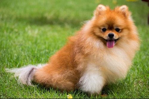 chú chó đáng yêu