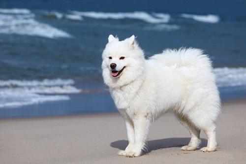 con chó đáng yêu