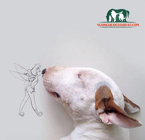 chó bull terrier mini