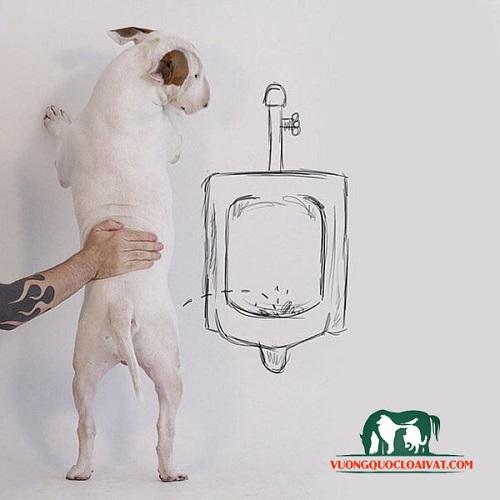 giá bán chó bull terrier