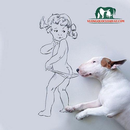 mua chó bull terrier tphcm