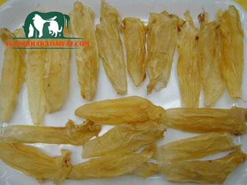 cá sủ vàng làm gì