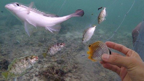bắt cá kình