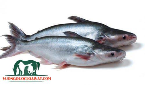 cá basa nấu gì ngon