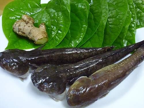 Cá bớp nấu canh chua lá lốt