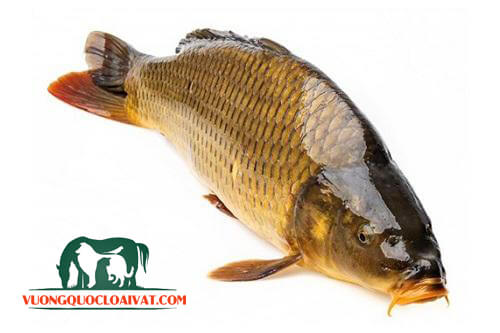 cá rán giòn
