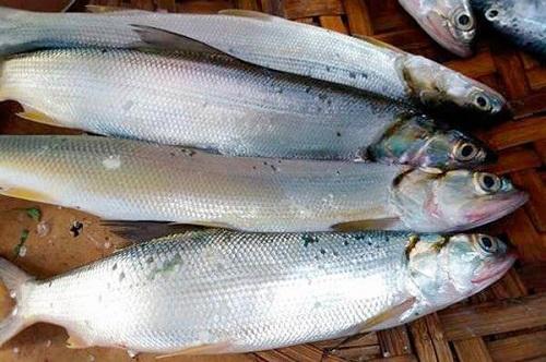 Cá Măng là cá gì? Nấu món gì NGON? GIÁ bao nhiêu? MUA ở đâu