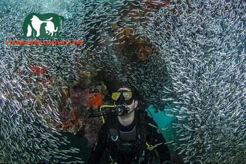 cá cơm hàn quốc