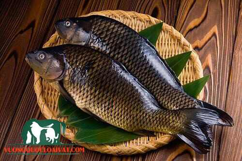 cá diếc nấu gì ngon
