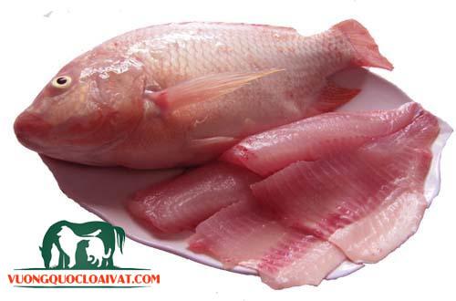 cá diêu hồng bao nhiêu 1kg