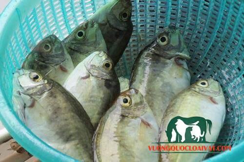 cá kình là cá gì