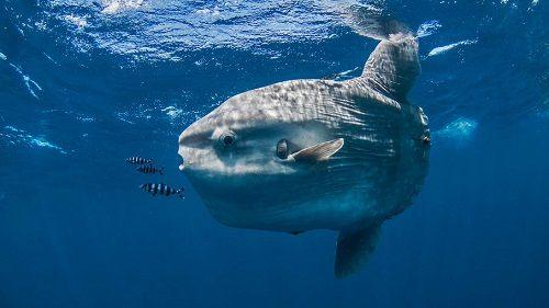 Con cá Mặt Trăng ăn gì