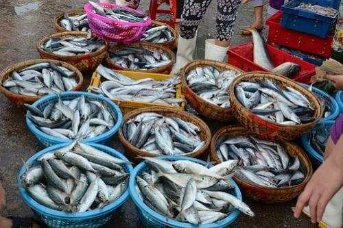 cá nục 1 nắng giá bao nhiêu