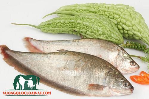cá thát lát rút xương