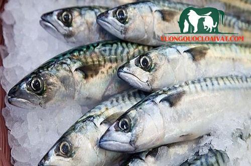 cá thu bao nhiêu tiền 1kg
