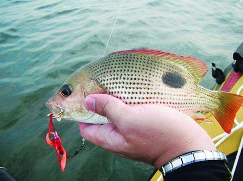 cá tráp vàng