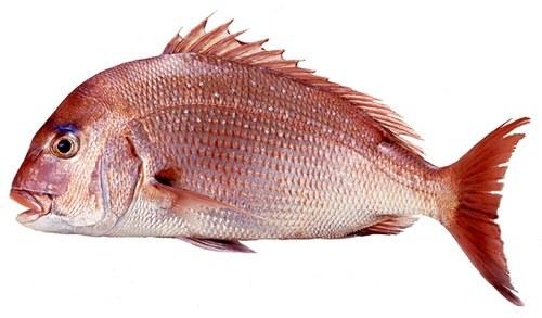 cá chép giòn hấp xì dầu