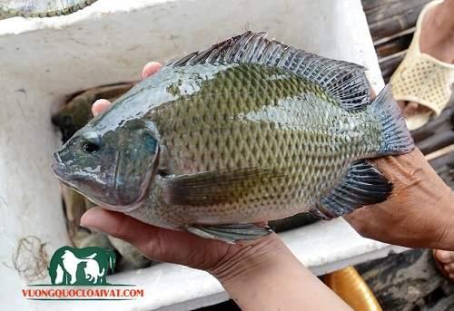 câu cá dìa biển