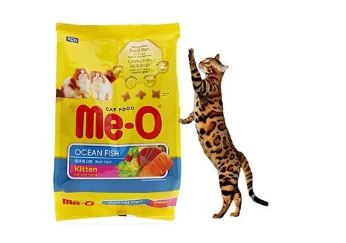 mèo ăn kem