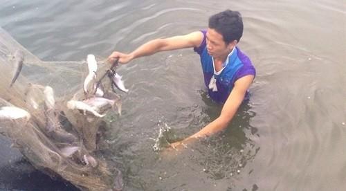 tập tính cá dứa
