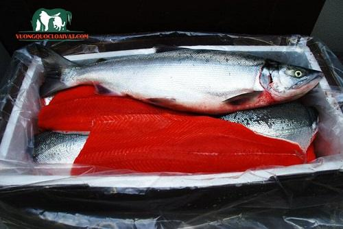 cá hồi việt nam