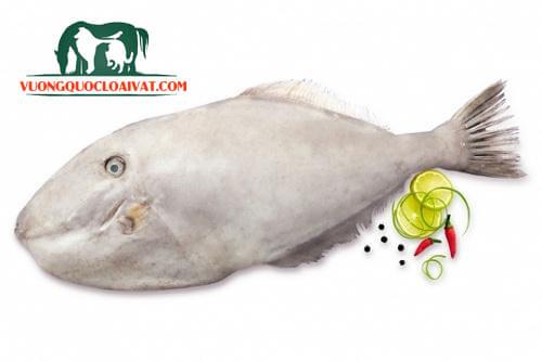 cách lột da cá bò da