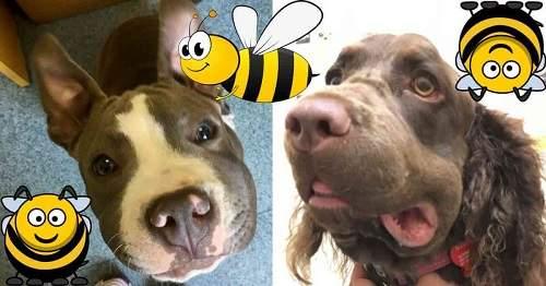 chó bị ong đốt phải làm sao