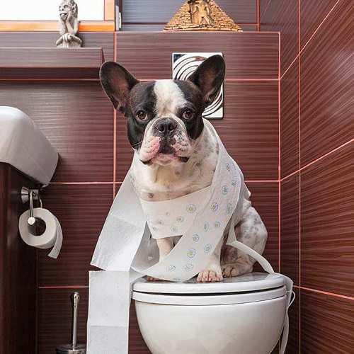 cho chó đi vệ sinh vào bốn cầu
