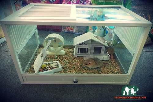 lồng chuột hamster
