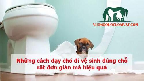 dạy chó đi vệ sinh đúng chỗ