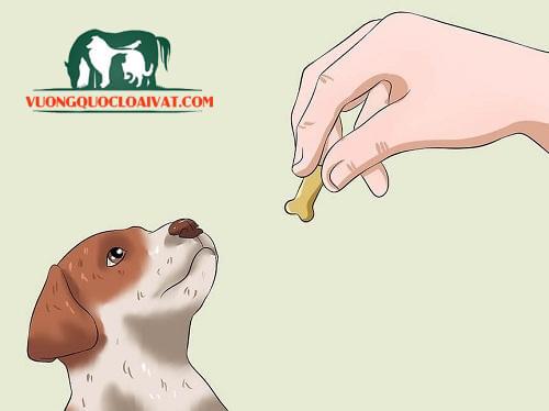 dạy chó đi vệ sinh vào bồn cầu