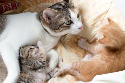 mèo có bầu mấy tháng thì đẻ