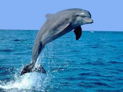 mơ thấy cá heo