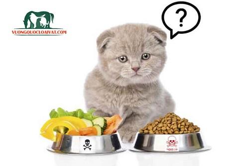 mèo bị tiêu chảy nên ăn gì