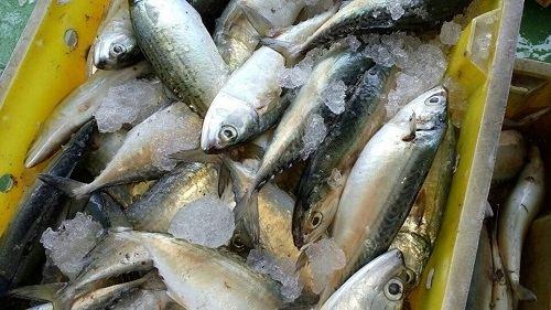 Cá bạc má giá bao nhiêu tiền 1Kg
