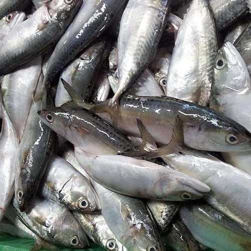 cá bạc má cá bạc má kho
