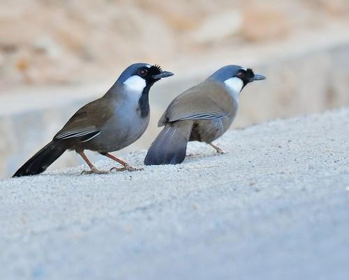 chim khưu sinh sản