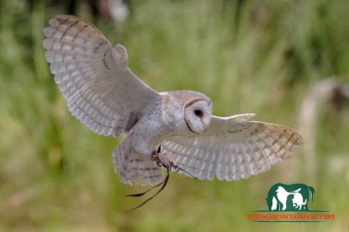chim heo báo hiệu điều gì