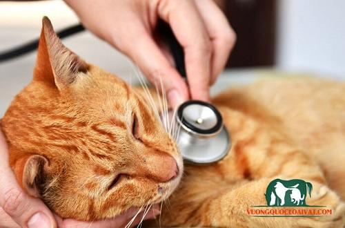 chữa mèo con bị đau mắt