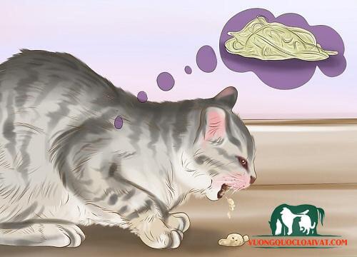 mèo bị tiêu chảy và nôn