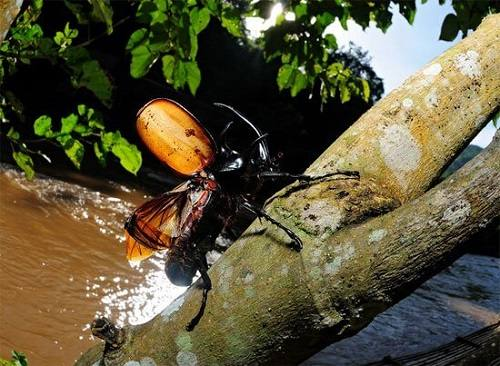 tác hại bọ cánh cứng