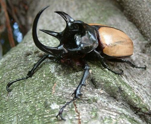 bọ cánh cứng