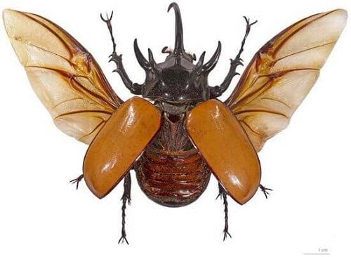 con bọ cánh cứng