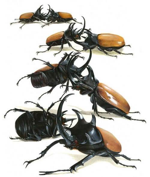 cách nuôi bọ cánh cứng