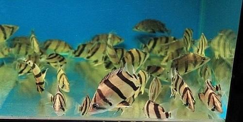 bể nuôi cá hổ
