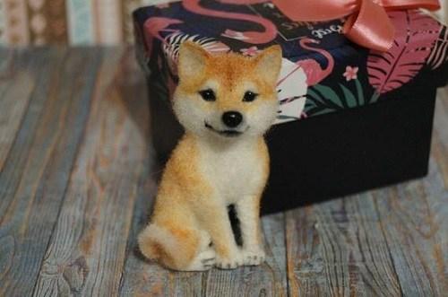 cách nuôi chó shiba của nhật