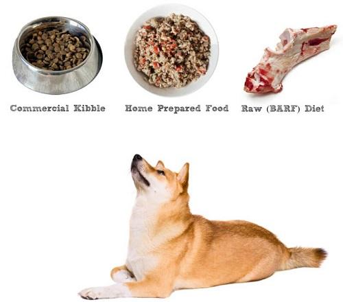 Chó Shiba inu ăn gì
