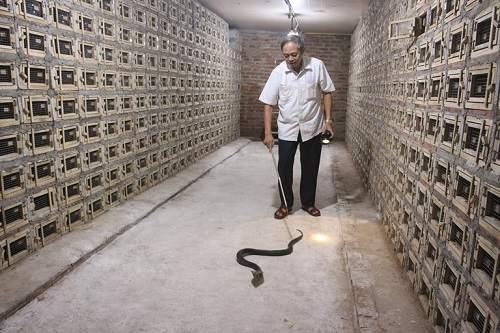 chuồng nuôi rắn hổ mang