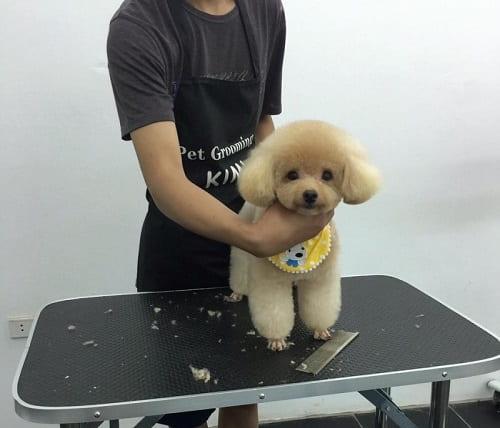 dịch vụ cắt móng chân cho chó