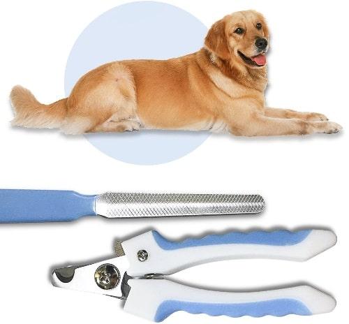 cắt móng chân cho chó